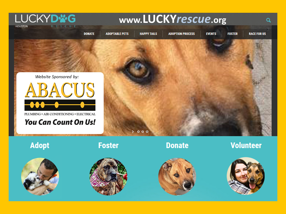Abacus Plumbing Partners with Lucky Dog Rescue Houston